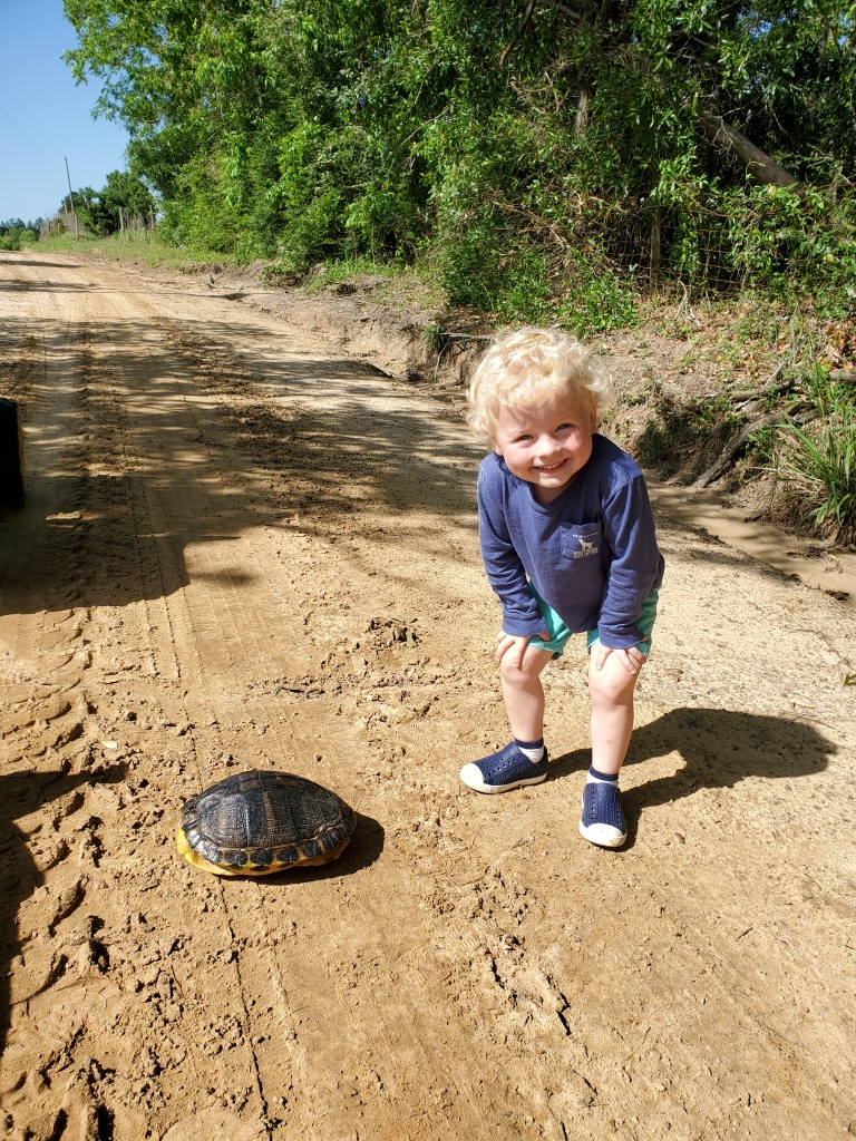 turtle and toddler